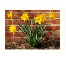 Daffodils in German Village: Harbingers of Spring Art Print