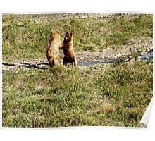 Denali Wildlife Poster