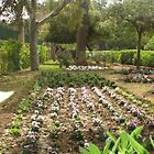 Argotti Gardens, Floriana, Malta by Rosalie M
