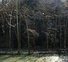 Gnarled Cloaks of Bark on a River  by Atheum