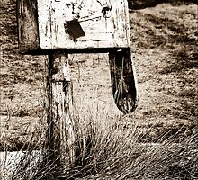 Death of Snail Mail II by Theodore Black