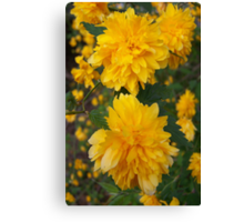 The Color Yellow Canvas Print