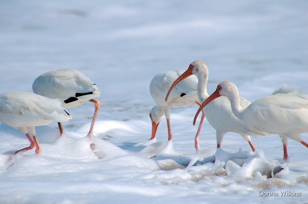 Ibis in Snow? by Donna Adamski