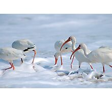 Ibis in Snow? Photographic Print