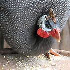 Jess the Guinea Fowl by DeaconBlues