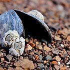 Barnacles & Blue Clam by Kathleen Daley