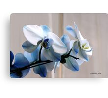 Crystal Blue Persuasion ~ Orchids Canvas Print
