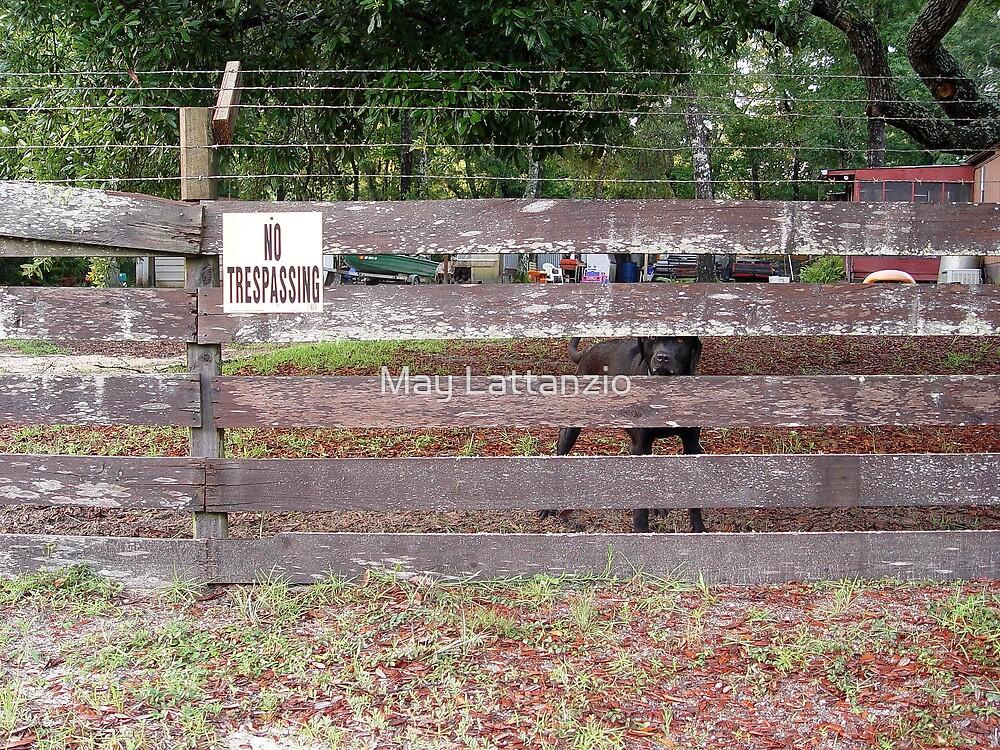 NO Trespassing by May Lattanzio