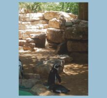 African Penguin at zoo. Kids Clothes