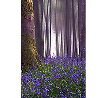 BIRD SONG, Delcombe Woods. Dorset Photographic Print