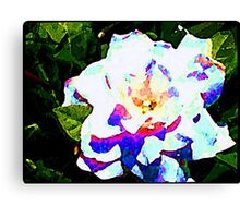 Coloured White Canvas Print