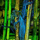 Bamboo and Blue String by mrfriendly