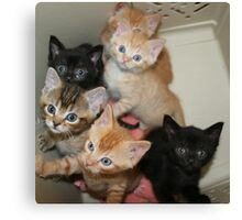 Six hungry kittens Canvas Print