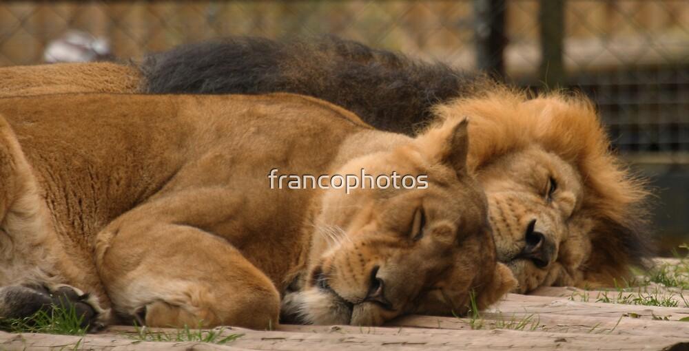 Do Not Disturb!! by Franco De Luca Calce