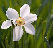 Spring! by Jenny Ryan