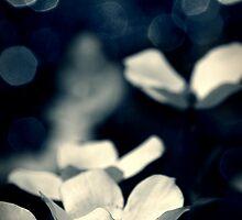 Papillon by James McKenzie
