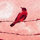 Bird on the Wire by shutterbug2010