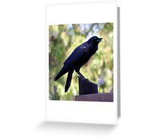 Black Bird, Childrens' Farm, Collingwood, Melbourne Greeting Card