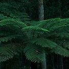 Giant Tree Fern  by MIchelle Thompson
