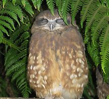 Sleeping Owl by aimznabz