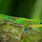 Gekko 2 by northbeach