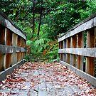 Mill Creek Walking Track NSW by Bev Woodman