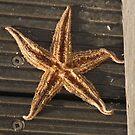 Starfish by Darren Freak