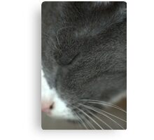 Use The Force, Kitty. Canvas Print