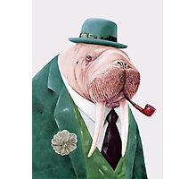 Walrus Green Photographic Print