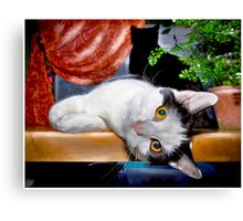 This Is Wee Little Winnie! Canvas Print