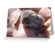 little forest bat Greeting Card