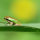 Baby Frog by Edyta Magdalena Pelc