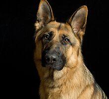 German Shepherd Dog by Wendy Mitchell