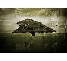 Desolate Tree Photographic Print
