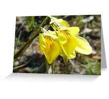 northern golden moth orchid Greeting Card