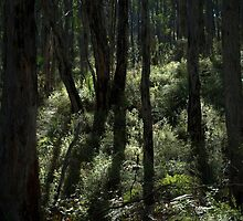 Looking To The West From The Nioka Track by Ben Loveday