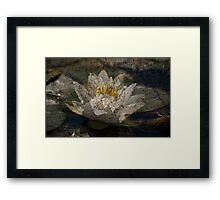 Textured Pond Lily Framed Print