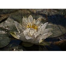 Textured Pond Lily Photographic Print