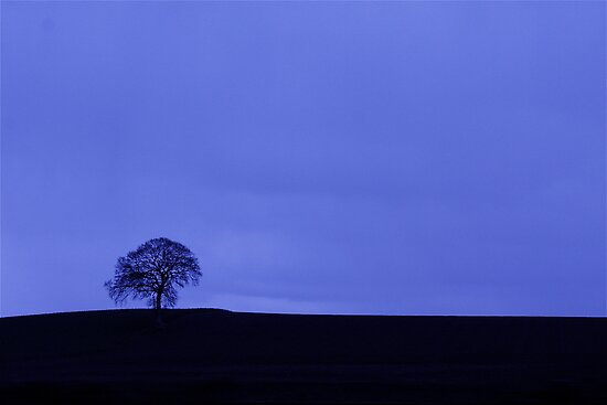 Tree Blues Ireland- fine art photograph by LJAphotography