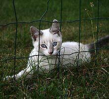 through the fence by Cornelia Togea