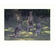 The 3 Kangaroos Art Print