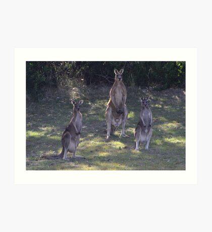 The 3 Kangaroos Art Print