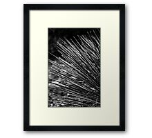 Experiments in Grey Framed Print
