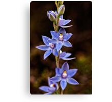 Scented Sun Orchid Canvas Print