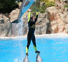 dolphin balancing act in loro park tenerife by Keith Larby