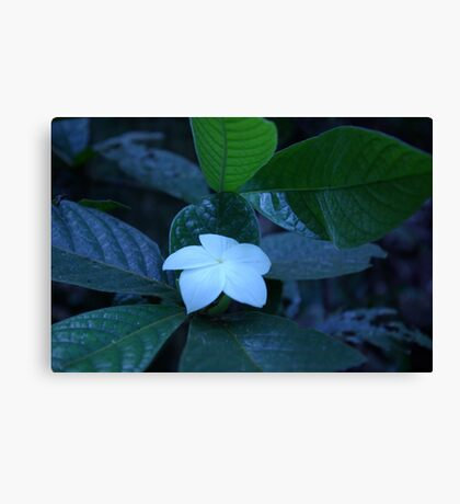 White Radiance  Canvas Print