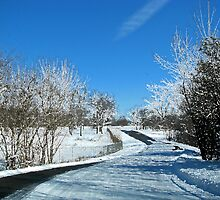 Frosted Country Drive by Linda Miller Gesualdo