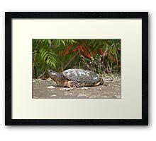 Gigantasaurus Framed Print