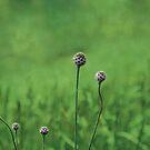Green garden by Anne Staub