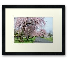 Weeping Cherries Framed Print